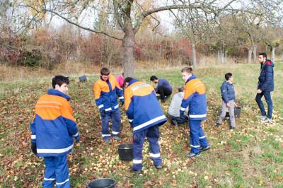 Auf der Streuobstwiese in Geismar sammelten die Jugendfeuerwehrmitglieder gemeinsam mit Jugendlichen aus einem Flüchtlingsheim dutzende Äpfel. Foto: Seebode