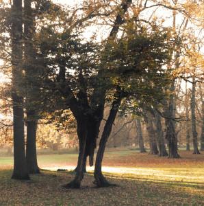 """Mit Fotos zum Thema """"Überlebenskunst der Natur""""  könnt ihr beim Fotowettbwerb der Bingo-Umweltstiftung mitmachen. Foto: Bingo-Umweltstiftung"""